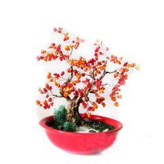 Дървото на живота от корал